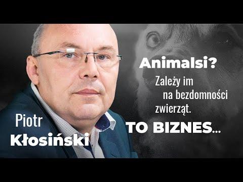 """Piotr Kłosiński o likwidacji bezdomności zwierząt: """"koniec z lewymi dochodami pseudoekologów"""""""