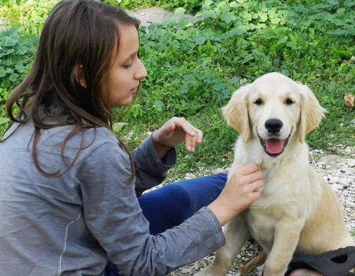 Czy Golden retriever to pies na kaczki, czy pies rodzinny? A może pies terapeuta?
