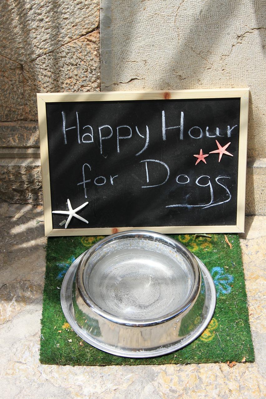 W żywieniu psów istotna jest dobra woda