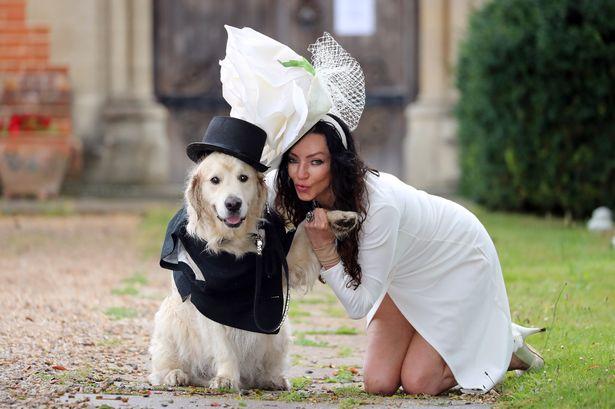 Pies w garniturze i suka w sukni? Oferta sprzedawców przekracza granice dobrostanu i dobrego smaku
