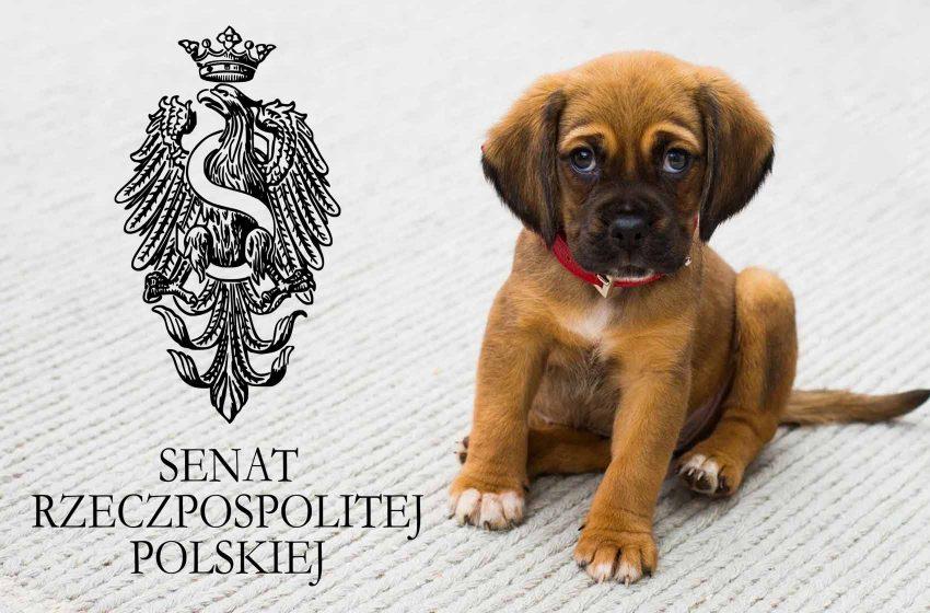 [TYLKO U NAS!] Kynolog z PPK w Senacie o oczekiwanej Piątce dla psów