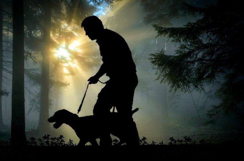 Pies na postrzałki i nie tylko. Po co myśliwym psy?