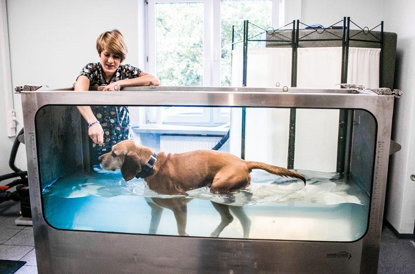 Zoofizjoterapia. Czy i kiedy nasz pies potrzebuje terapeuty?