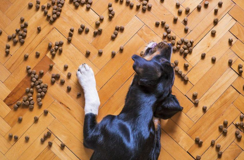 NASZ EKSPERT: Żywienie psów uległo zmianie totalnej
