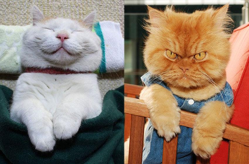 Kiedy nasz kot jest smutny lub szczęśliwy? Podajemy proste objawy!