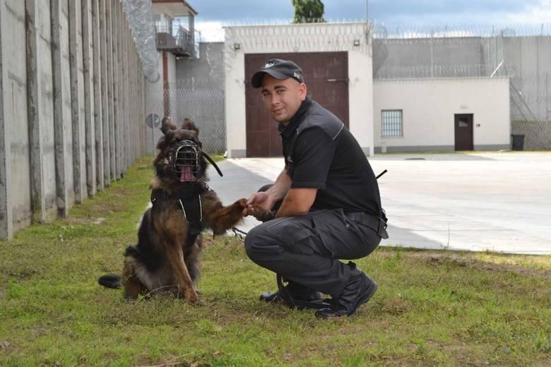Psy w Służbie Więziennej. Konwojują, tropią, pilnują i bronią!