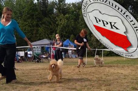 Jest już harmonogram wystaw psów w tym roku! Lista krajowa na marzec!