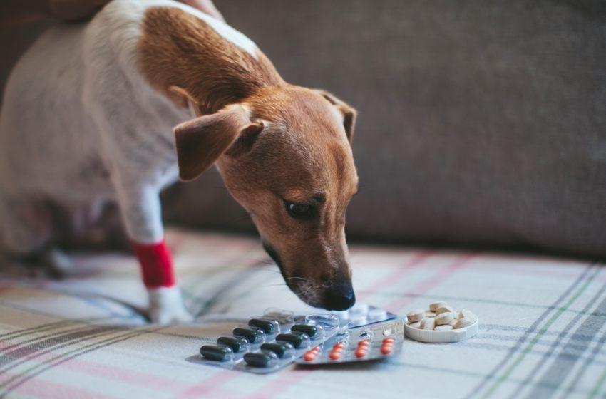 Suplementy i witaminy dla ludzi są NIEBEZPIECZNE dla psów!