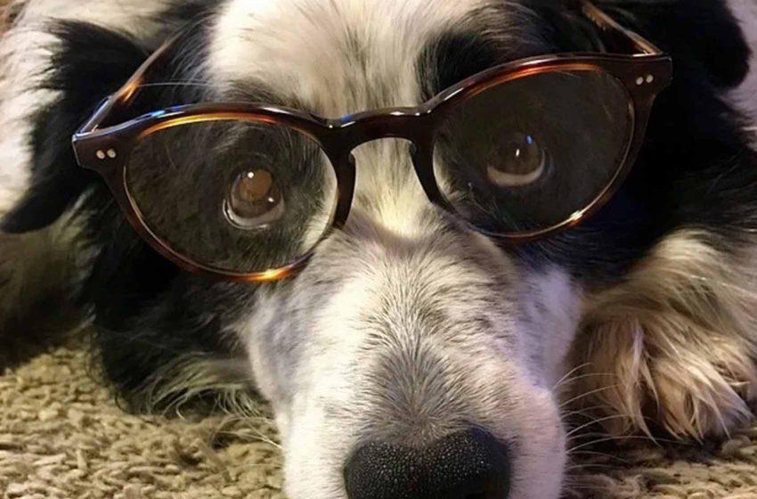 Mądry piesek czy geniusz? Możliwości poznawcze psów pod lupą naukowców