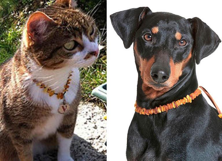 Naszyjniki z bursztynu dla psów i kotów. Naturalna przeciwkleszczowa osłona