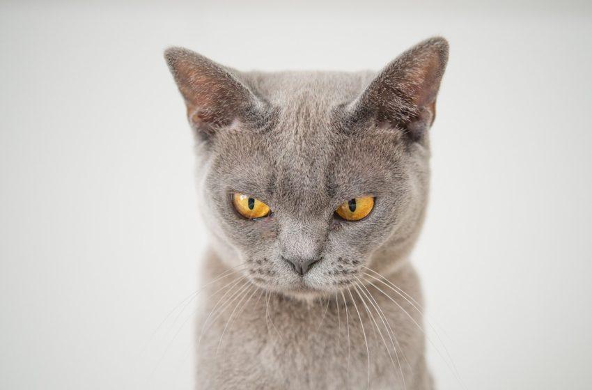 Nie każdy może zostać zaklinaczem kotów…