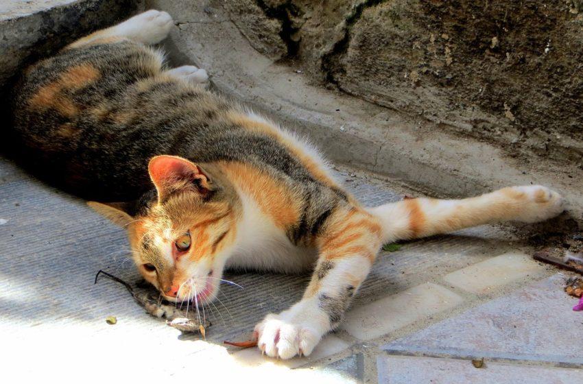 Makabryczne kocie oznaki miłości