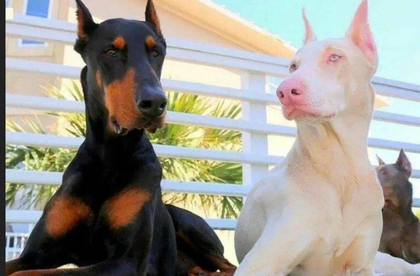 Albinizm. Perły natury w psiej skórze