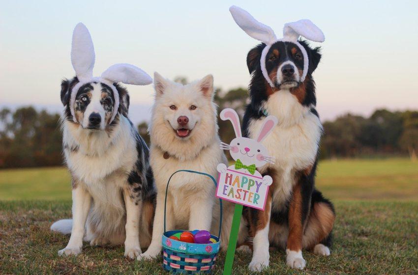 Hodowcy i posiadacze psów! To ŻYCZENIA dla nas na ten wyjątkowy czas…