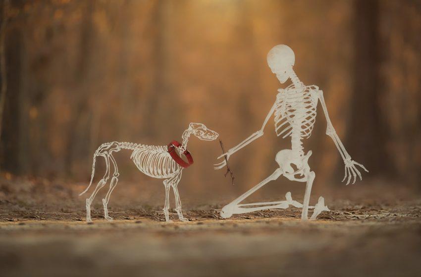 Psi kościotrup. Tajemnice psiego szkieletu