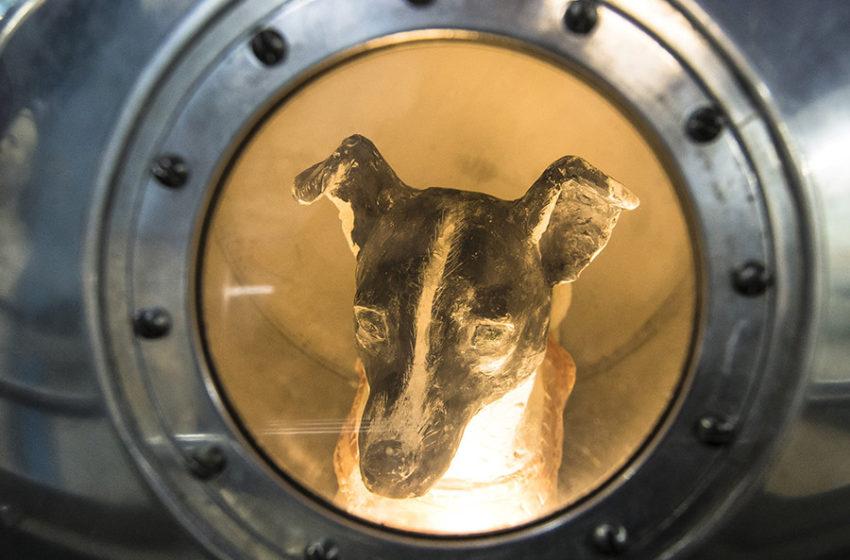 5 psów celebrytów, które zna każdy z nas!