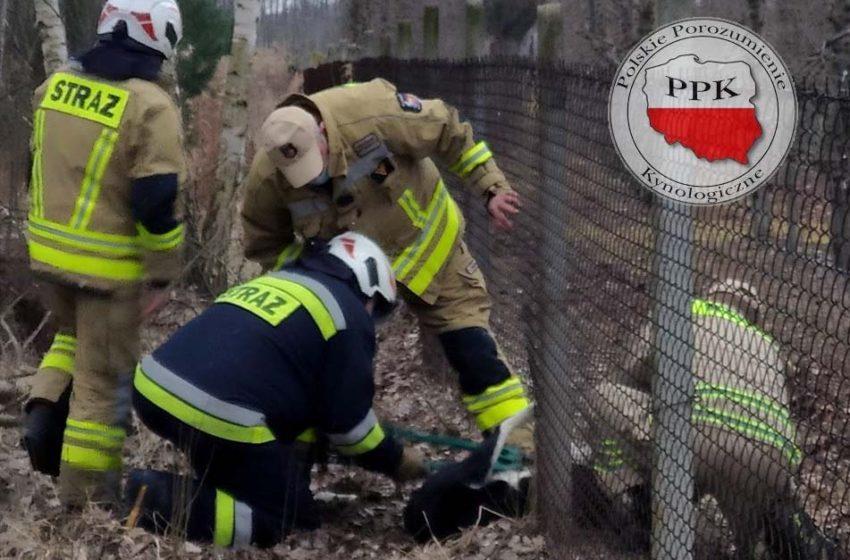 Straż pożarna potrzebuje narzędzi, by pomagać zwierzętom. Jest pomoc ze strony PPK!