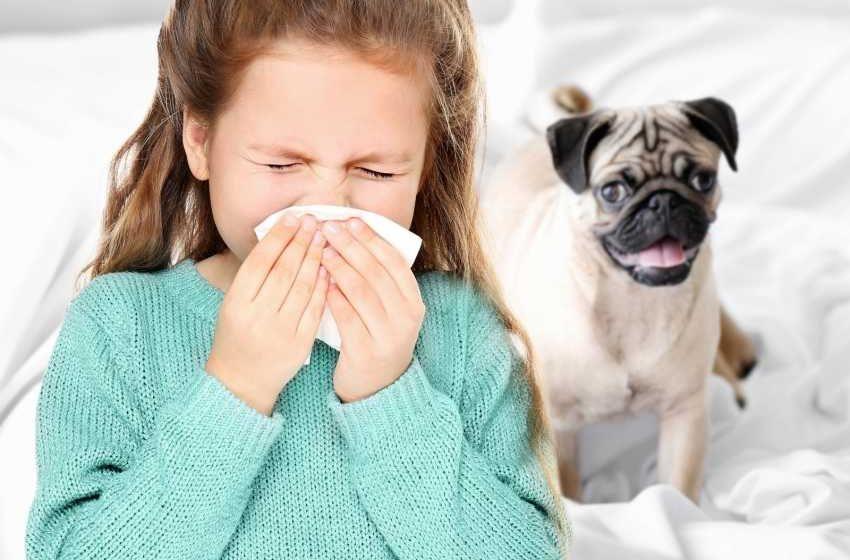 Kocham psy i koty, ale mam alergię. Co robić?