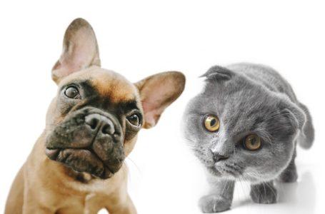 Z jednej miski? Pies i kot nie mogą spożywać tej samej karmy!