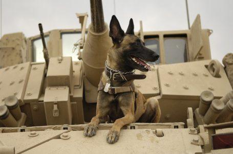 Psy wojny! Od starożytności do współczesności