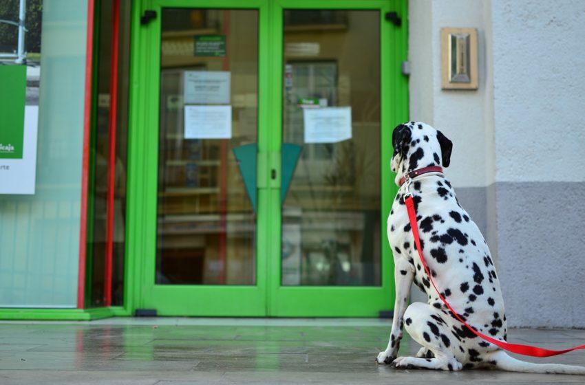 Lęk separacyjny u psa. Objawy i środki zaradcze