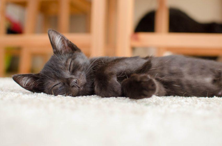 Ile i jak śpi nasz kot? Ciekawe statystyki!
