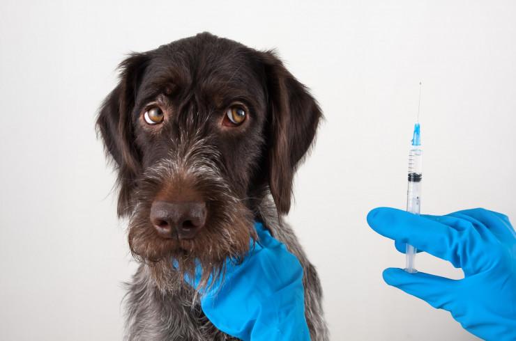 Czy niedługo będziemy szczepić psy i koty na koronawirusa?