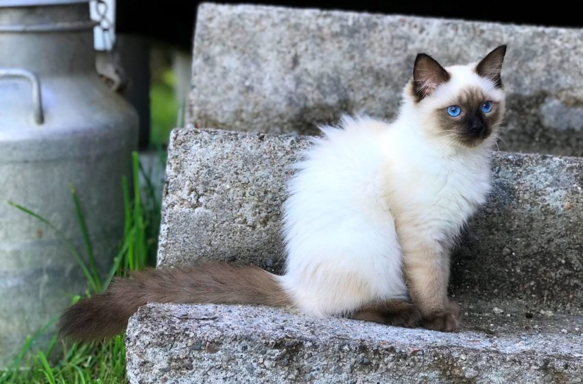 Mleko w diecie kotów