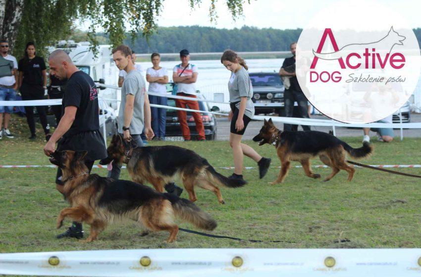 Szkoła dla psów – Active DOG