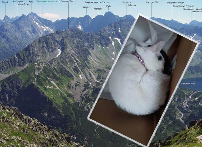 Kot znaleziony… na szczycie w Tatrach! Nietypowa kocia samowolka?