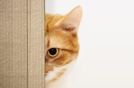 Koty kochają pudełka! Wiesz dlaczego?
